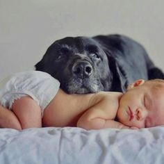 Love the shot. Love the old dog protecting and loving this new babe. LOVE the old dogs DERP EYES! Hahaha