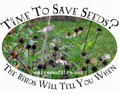 Time to save seeds for planting next year? The birds will tell you when - see how >>>