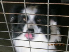 Gallery of council pounds and their impounded animals - Rescue Rex #Wagga NSW AUSTRALIA