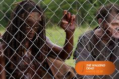 Michonne gravemente herida, desde la prisión.  The Walking Dead - Martes 22.00  #TWD3EnFOX Mira contenido exclusivo en www.foxplay.com