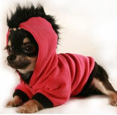 Valentine's Day Clothes / Hoodie Gifts for the Puppy Dog: Dog Hot Pink and Black Fleece Mohawk Hoodie by Petit Dog Apparel @ Etsy. My Chi has an outfit just like this one!