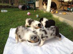 Puppy buffet!