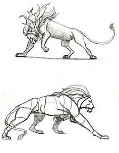 Exciting Learn To Draw Animals Ideas. Exquisite Learn To Draw Animals Ideas. Lion Drawing, Body Drawing, Anatomy Drawing, Manga Drawing, Animal Sketches, Animal Drawings, Art Sketches, Art Drawings, Lion Anatomy