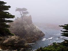 The Lonely Cypress near Pebble Beach - Monterey 17 Mile Drive