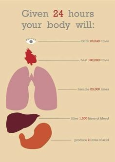 This is what your body does in one day