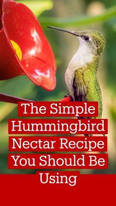 Make Hummingbird Food, Hummingbird Plants, Hummingbird Feeder Food, Homemade Hummingbird Nectar, Diy Bird Feeder, Humming Bird Feeders, Humming Birds, How To Attract Hummingbirds, Attracting Hummingbirds