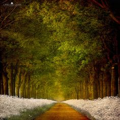 Path of Joy by Lars van de Goor on flickr - another amazing shot!