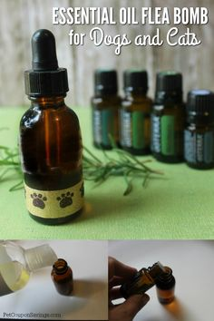 Get rid of fleas the natural way. Try this Essential Oil Flea Bomb for dogs and cats! #dogs #cats #diy #essentialoils