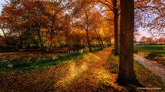 Autumn Walks, Free Desktop Wallpaper, Fall Pictures, Art Studios, Country Roads, Landscape, Park, Nature, Plants