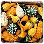 Organic Ornamental Mix Gourd