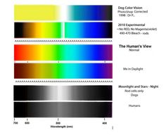 Dog color vision and human view