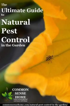 From ants to squash vine borers, organic and natural pest control for 20 common garden pests, plus tips for encouraging beneficial insects & other allies.