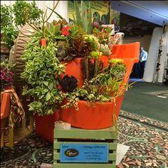 Succulent Garden in Bright Orange by Eco Personal Garden