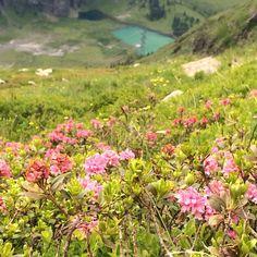 Mountains, Nature, Plants, Travel, Hiking, Simple, Nice Asses, Naturaleza, Viajes