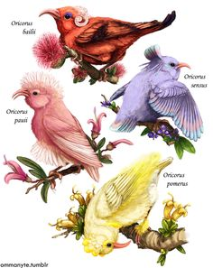 """Some really fab new Pokémon based on Hawaiian Honeycreepers. Just look at that Adaptive Radiation I wanted to emulate that style you see in those beautifully illustrated old bird identification books """" Pokemon Fan Art, Real Pokemon, Pokemon Special, Pokemon Stuff, Realistic Cartoons, Pokemon Official, Cute Pokemon Wallpaper, Pokemon Images, Curious Creatures"""