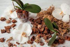 Ako presadiť a znovu naštartovať orchidey? Pesto, Garlic, Vegetables, Plants, Vegetable Recipes, Plant, Veggies, Planting, Planets