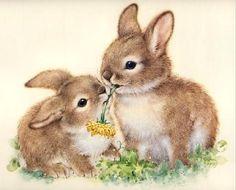 conejo conejito bunnies ♥ღ