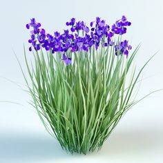 3D iris sibirica model Trees And Shrubs, Trees To Plant, Trees Top View, Free Green Screen, Urban Design Plan, Planting Plan, Tree Tops, Painting Patterns, Botany