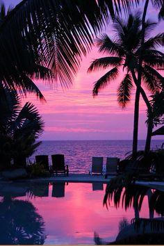 night ocean palm tree place romantic sea sun sunset