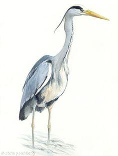 heron bird - Google Search
