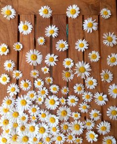 background, black and white, daisy, flowers, wallpaper Wallpaper Backgrounds, Iphone Wallpaper, Walpaper Iphone, Colorful Wallpaper, Daisy Love, Pink Daisy, Mellow Yellow, Pretty Pictures, Wallpaper Iphone Disney