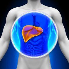 Was der Leber schadet, wie wir selbst den Leber-Stoffwechsel unterstützen können und wie unser größtes Organ lange gesund bleibt.