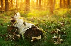 """resting"" by ladyrapid.deviantart.com on @deviantART  #resting #magic #place #forest #nature #log #colors #morning"