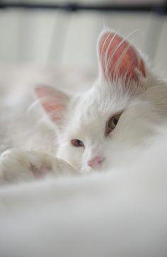 turningpoint2.. Sleepy kittten...TG: