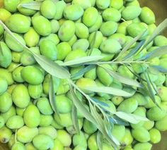 Olives from the tree today