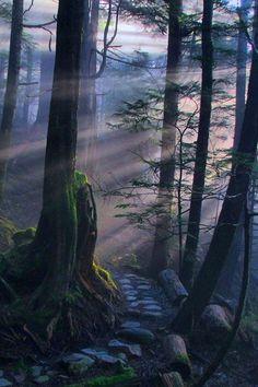 Dark Forest Path, Ketchikan, Alaska #Forest #Alaska