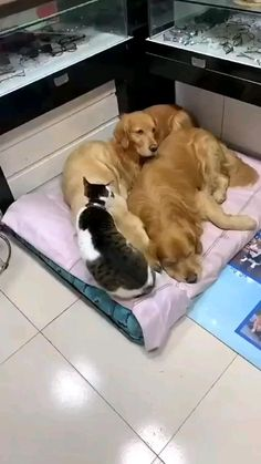 Cute Wild Animals, Baby Animals Pictures, Cute Animal Videos, Cute Little Animals, Cute Animal Pictures, Cute Funny Animals, Funny Dogs, Animals Beautiful, Funny Dog Videos