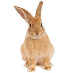 Urge cosmetic companies to stop the practice of animal testing once and for all.
