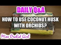 Today's question is: Is coconut for reptiles good? Where can I find it? So here is how to use coconut husk destined for reptiles. Rinsing it a few days with . Orchid Care, Being Used, Reptiles, Coconut, Make It Yourself, Gardening, Youtube, Bedroom, Caring For Orchids