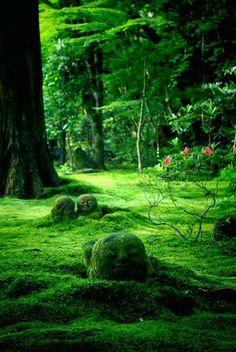 Têtes de boudha dans la mousse. Kyoto, Japan