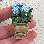 Miniature Blue Hydrangeas in Flower Pot