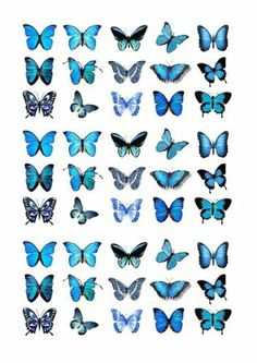 Blue Butterflies Edible­ Cake Toppers - 45 x Blue Butterflies Edible Cake . - Blue Butterflies Edible­ Cake Toppers – 45 x Blue Butterflies Edible Cake Toppers (Wedding, - Butterfly Wallpaper Iphone, Iphone Background Wallpaper, Aesthetic Iphone Wallpaper, Aesthetic Wallpapers, Blue Butterfly Tattoo, Butterfly Drawing, Butterfly Painting, Watercolor Butterfly Tattoo, Butterfly Tattoo Designs