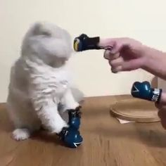 Animals Discover Boxing Time :D - Tiere - Animals Funny Animal Memes Cute Funny Animals Funny Animal Pictures Cute Baby Animals Cat Memes Funny Cute Animals And Pets Cute Cats Kittens Cutest Funny Animal Memes, Cute Funny Animals, Funny Animal Pictures, Cute Baby Animals, Cat Memes, Funny Cute, Animals And Pets, Cute Kittens, Cats And Kittens