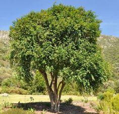 Chapman House, Hedges, Trees To Plant, Garden Plants, Bonsai, Shrubs, Flora, Patio, Beautiful