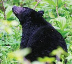 Glacier Park campground closes Glacier National Park officials announced today, Sept. 20, that the St. Mary Campground will be closed temporarily because of a recent increase in black bear and grizzly bear activity and the potential for human/bear interactions.