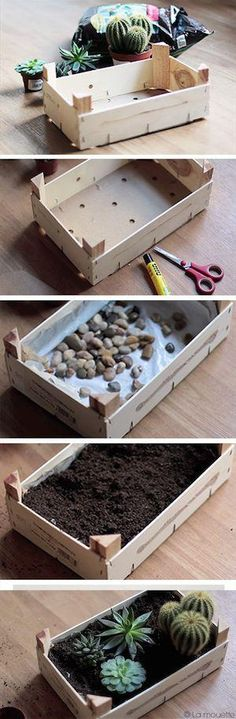 Mini-jardin de cactus dans une caisse de clémentines