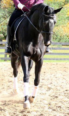 horse stretch
