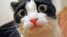 Top Şaşırtan Kediler Koleksiyonu 2014 - Komik ve şaşırtan kedilerin tepki vermesi