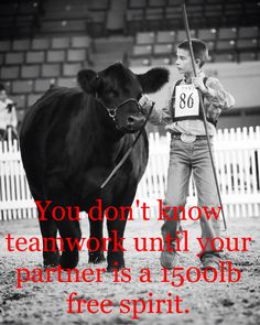 Silver Barn Cattle is here for your show steer & heifer needs! Have questions about how to clip a calf? How to fit & groom show cattle? Cow Quotes, Horse Quotes, Farm Quotes, Smile Quotes, Wisdom Quotes, Country Girl Quotes, Country Girls, Southern Quotes, Girl Sayings