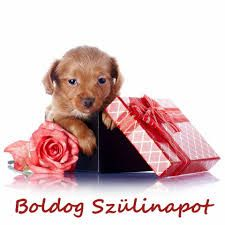"We have a dog we called ""Micho"", I looked at him today, and I have determined to give you a nice picture of little puppy with beautiful gift boxes and roses won Cute Little Puppies, Cute Puppies, Puppy Care, Puppy Breeds, Beautiful Dogs, Deco, Mans Best Friend, Dog Owners, Chihuahua"
