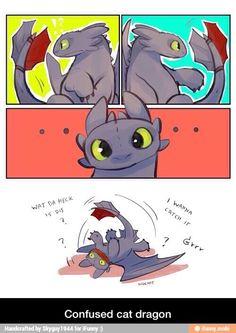 Confused cat dragon / iFunny :)