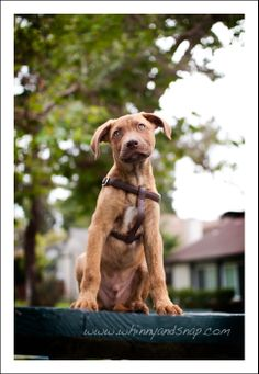 How to Photograph Your Dog: Mood-Altering Camera Angles | Dogster