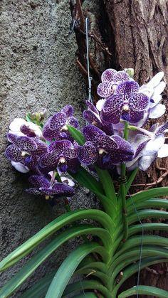 Strange Flowers, Unusual Flowers, Unusual Plants, Rare Flowers, Rare Plants, Botanical Flowers, Exotic Plants, Purple Flowers, Beautiful Flowers