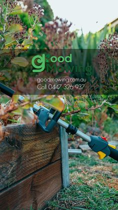 Well, if you don't have the time, then you can hire us as your local expert in lawn mowing and small hedge trimming services based in Bundoora and servicing residents in the surrounding regions. Hedges, Lawn Mower, Outdoor Power Equipment, Home And Garden, Lawn Edger, Grass Cutter, Living Fence, Shrubs, Garden Tools