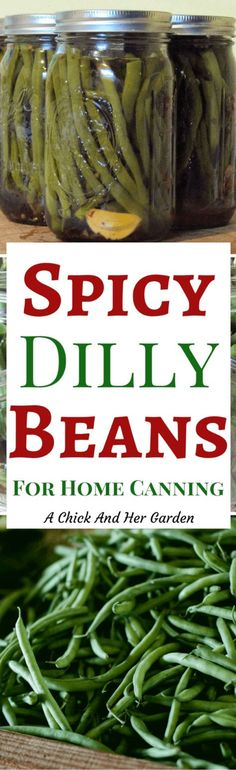 Have a crop of green beans just waiting to be preserved? Try this Spicy Dilly Beans recipe for home canning!
