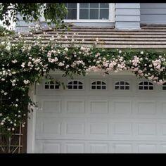 spring dreams — The Pleated Poppy cecile bruner roses – garden garage ideas Home Design, Modern Design, Garage Trellis, Roses Pinterest, Rose Trellis, Garage Exterior, Garage Doors, Garage Door Makeover, Climbing Vines